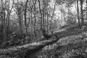 Lucy Saggers - Wild garlic woods